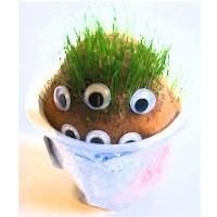 Grow A Grass Head Monster Craft