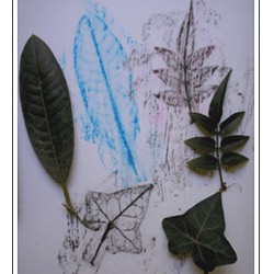 Leaf Rubbings - Kids Crafts