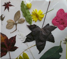 Image of No Glue  Fall Nature Collage
