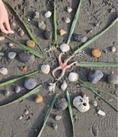 Image of Beach Mandalas