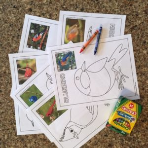 Bird Coloring Page Samples