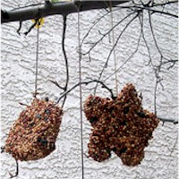Image of Plastic Bottle Birdfeeder