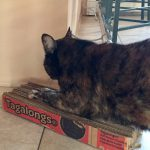Cat Scratching Pad Made From Recycled Cardboard Scout Cookie Cartons