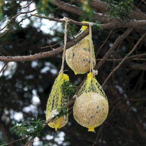 Make your own suet bird feeder.
