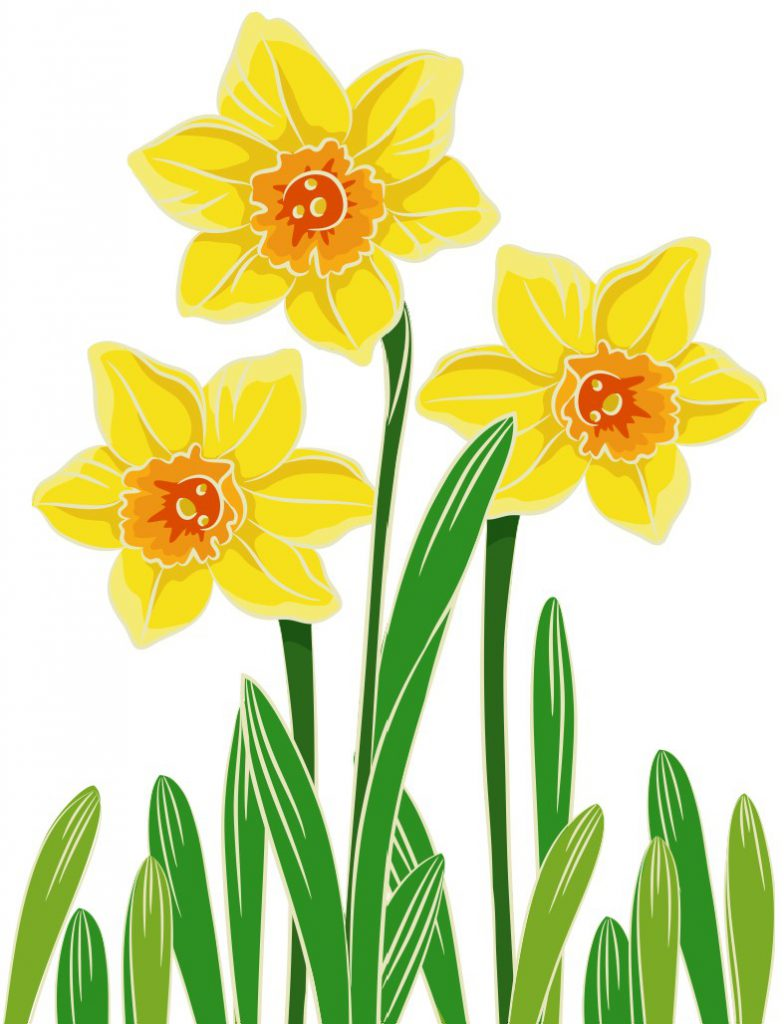 Egg carton daffodils for Template of a daffodil