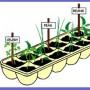 Image of Seedling Pot