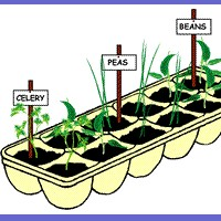 Image of Seedling Pot