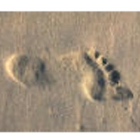 Fabulous Footprints