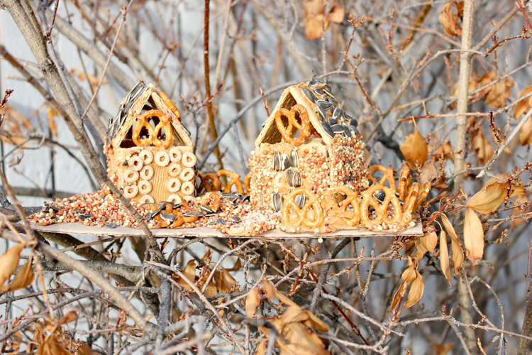 Graham Cracker Bird Feeders
