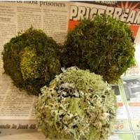 Scented Mossy Orbs