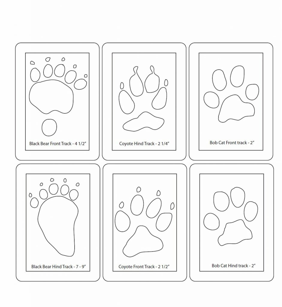 paws-memory-game 2