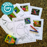 Roundup of Bird Crafts for Young Children