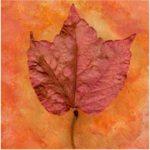 Scanned Leaf