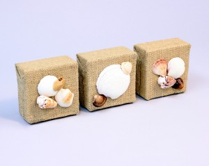 Image of Sea Shell Decorations