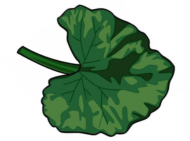 toeprint-caterpillar-leaf